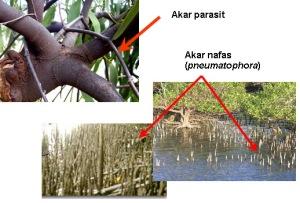 modifikasi akar sebagai fungsi penting